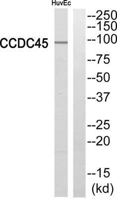abbexa CCDC45 Antibody SKU: abx014380 package