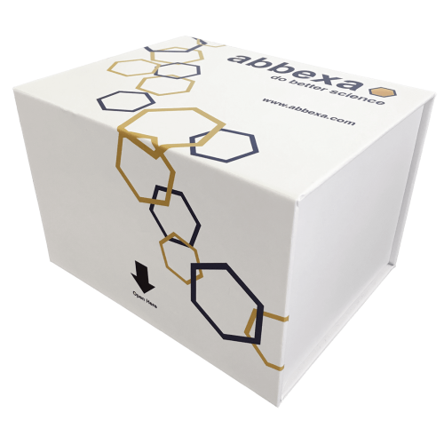 abbexa Human Transient Receptor Potential Cation Channel Subfamily V Member 4 (TRPV4) ELISA Kit SKU: abx383968 package