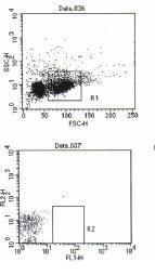 US Biological Mouse Anti- Salmonid Immunoglobulin (FITC) mAb SKU:S0059-10 package