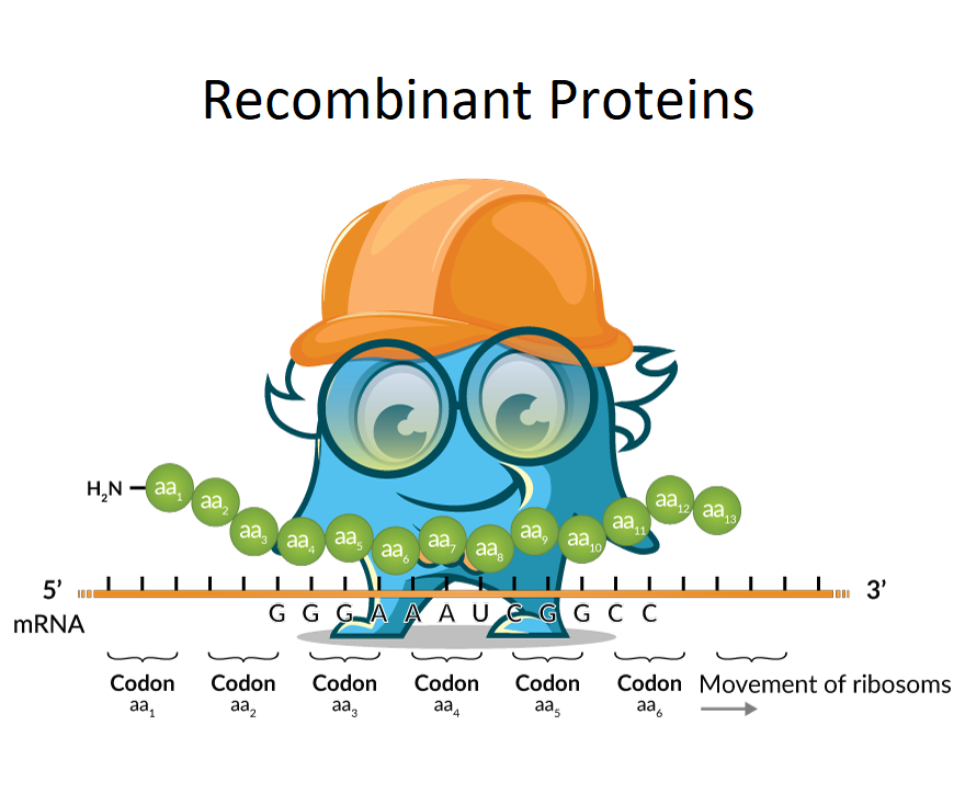 Recombinant Murine RELM Gamma Protein SKU: PROTQ7TM98-1