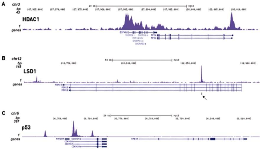 ChIP-seq Kit For Transcription Factors (High Sensitivity) SKU: CK1002
